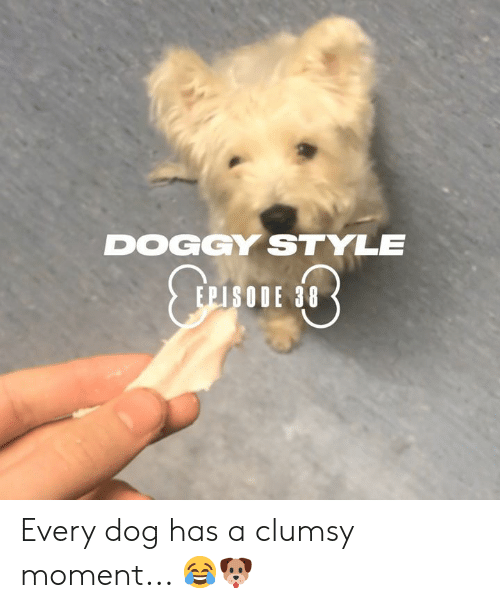 Dog Has: DOGGY STYLE  EPISODE 38 Every dog has a clumsy moment... 😂🐶