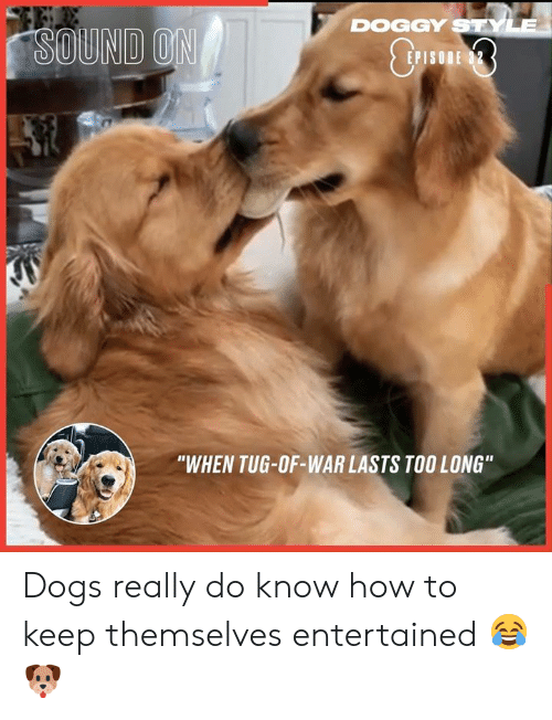 """doggy: DOGGY STYLE  SOUND ON  E 32  P  """"WHEN TUG-OF-WAR LASTS TOO LONG"""" Dogs really do know how to keep themselves entertained 😂🐶"""