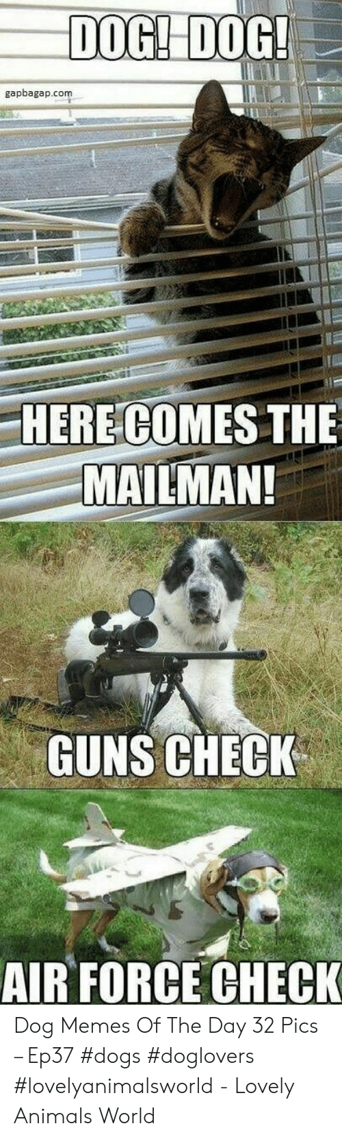 Air Force: DOGI DOG  gapbagap.com  HERE COMES THE  MAILMAN!  GUNS CHECK  AIR FORCE CHECK Dog Memes Of The Day 32 Pics – Ep37 #dogs #doglovers #lovelyanimalsworld - Lovely Animals World