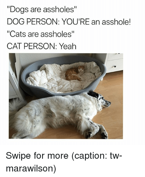 """Cats, Dogs, and Funny: """"Dogs are assholes""""  DOG PERSON: YOU'RE an asshole!  """"Cats are assholes""""  CAT PERSON: Yeah Swipe for more (caption: tw-marawilson)"""