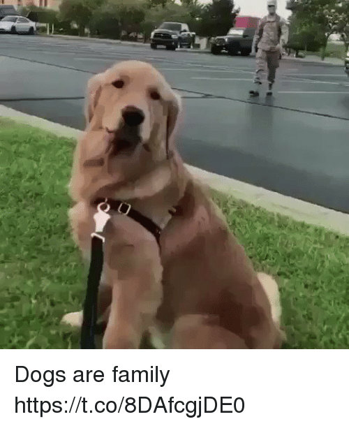 Dogs, Family, and Memes: Dogs are family https://t.co/8DAfcgjDE0
