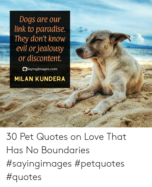 Dogs, Love, and Paradise: Dogs are our  link to paradise.  |They don't know  evil or jealousy  or discontent.  SayingImages.com  MILAN KUNDERA 30 Pet Quotes on Love That Has No Boundaries #sayingimages #petquotes #quotes