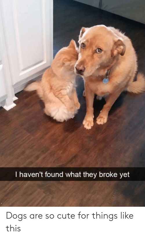 so cute: Dogs are so cute for things like this