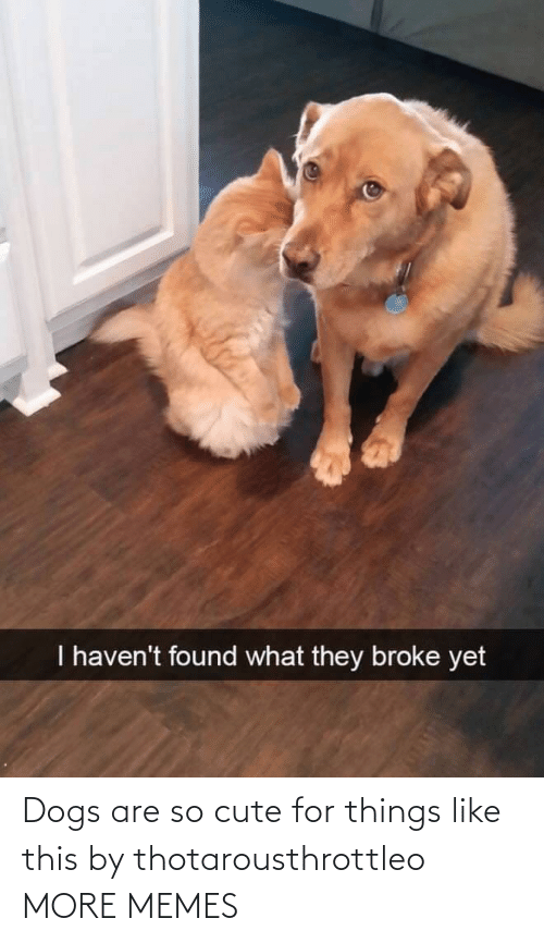 so cute: Dogs are so cute for things like this by thotarousthrottleo MORE MEMES