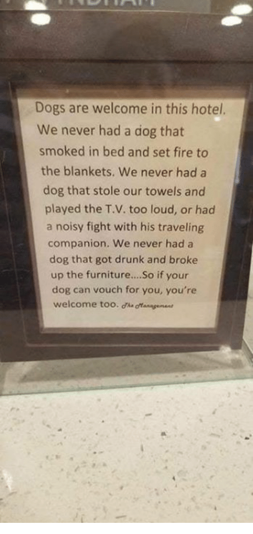 noisy: Dogs are welcome in this hotel.  We never had a dog that  smoked in bed and set fire to  the blankets. We never had a  dog that stole our towels and  played the T.V. too loud, or had  a noisy fight with his traveling  companion. We never had a  dog that got drunk and broke  up the furniture...So if your  dog can vouch for you, you're  welcome too. ha gangeen