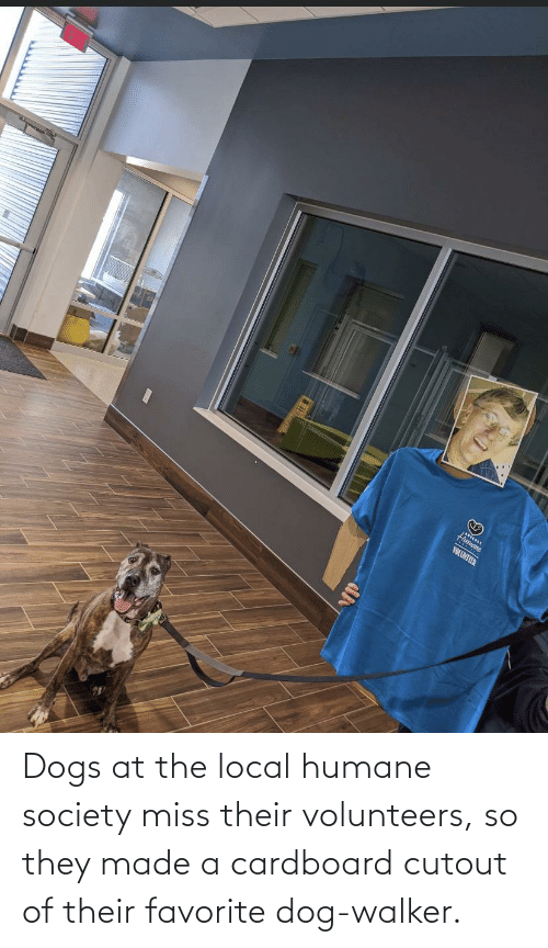 walker: Dogs at the local humane society miss their volunteers, so they made a cardboard cutout of their favorite dog-walker.