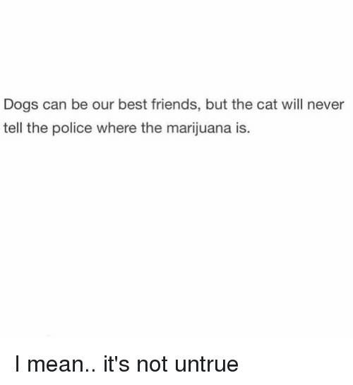 Dogs, Friends, and Memes: Dogs can be our best friends, but the cat will never  tell the police where the marijuana is I mean.. it's not untrue