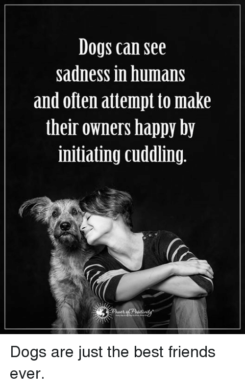 Initialism: Dogs can see  sadness in humans  and often attempt to make  their owners happy by  initiating cuddling. Dogs are just the best friends ever.