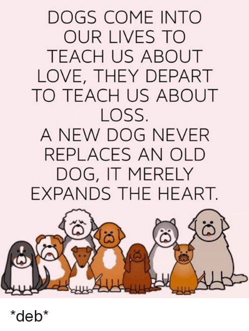 Dogs Come Into Our Lives Tc Teach Us About Love They Depart To Teach