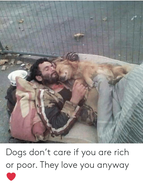 Dogs, Love, and Memes: Dogs don't care if you are rich or poor.  They love you anyway ❤️