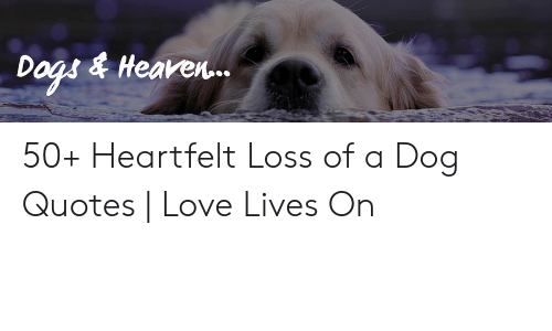 Dogs & Heaven 50+ Heartfelt Loss of a Dog Quotes | Love