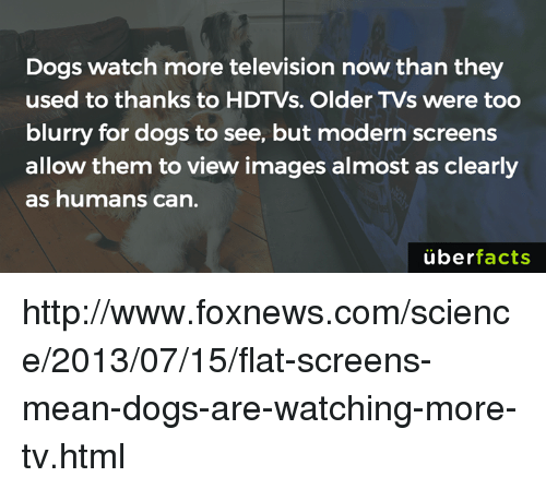 flat screen: Dogs watch more television now than they  used to thanks to HDTVs. Older TVs were too  blurry for dogs to see, but modern screens  allow them to view images almost as clearly  as humans can.  uber  facts http://www.foxnews.com/science/2013/07/15/flat-screens-mean-dogs-are-watching-more-tv.html