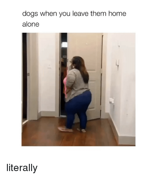 Being Alone, Dogs, and Home Alone: dogs when you leave them home  alone literally