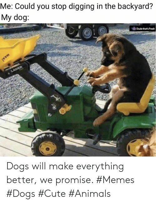 Cute animals: Dogs will make everything better, we promise. #Memes #Dogs #Cute #Animals