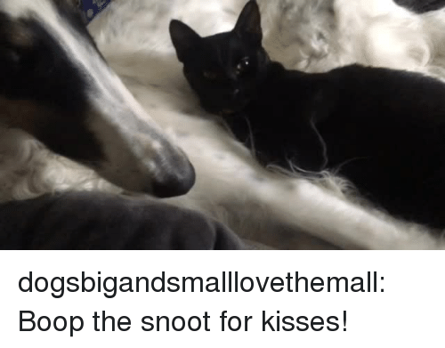 Target, Tumblr, and Blog: dogsbigandsmalllovethemall:  Boop the snoot for kisses!