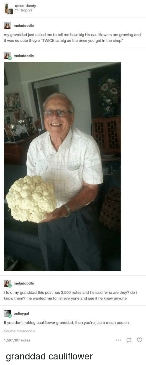 "Cute, Mean, and How: dolce-dandy  tropivs  meladoodle  my granddad just called me to tell me how big his cauliflowers are growing and  it was so cute theyre ""TWICE as big as the ones you get in the shop""  meladoodle  meladoodle  i told my granddad this post has 3,500 notes and he said 'who are they? do i  know them? he wanted me to list everyone and see if he knew anyone  policygal  If you don't reblog cauliflower granddad, then you're just a mean person  Source:meladoodle  1,597,307 notes granddad cauliflower"
