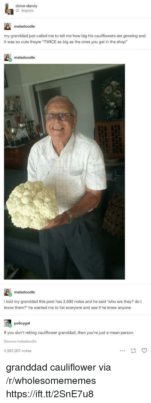 """dandy: dolce-dandy  tropivs  meladoodle  my granddad just called me to tell me how big his cauliflowers are growing and  it was so cute theyre """"TWICE as big as the ones you get in the shop""""  meladoodle  meladoodle  i told my granddad this post has 3,500 notes and he said 'who are they? do i  know them? he wanted me to list everyone and see if he knew anyone  policygal  If you don't reblog cauliflower granddad, then you're just a mean person  Source:meladoodle  1,597,307 notes granddad cauliflower via /r/wholesomememes https://ift.tt/2SnE7u8"""