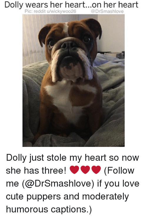 Cute, Love, and Memes: Dolly  wears  her  heart...o.n  her  heart  Pic: reddit u/wickywoo26  @DrSmashlove Dolly just stole my heart so now she has three! ❤️❤️❤️ (Follow me (@DrSmashlove) if you love cute puppers and moderately humorous captions.)