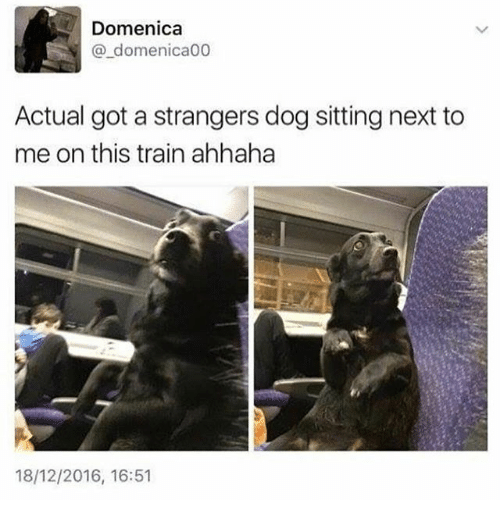 Funny, Train, and Got: Domenica  @_domenica00  Actual got a strangers dog sitting next to  me on this train ahhaha  18/12/2016, 16:51