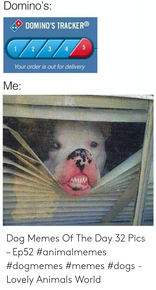 Animals, Dogs, and Memes: Domino's:  DOMINO'S TRACKER  5  1  3  Your order is out for delivery  Me: Dog Memes Of The Day 32 Pics – Ep52 #animalmemes #dogmemes #memes #dogs - Lovely Animals World