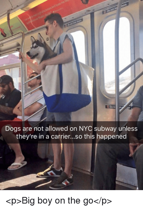 Dogs, Subway, and Big Boy: Donc  Dogs are not allowed on NYC subway unless  they're in a carrier...so this happened <p>Big boy on the go</p>