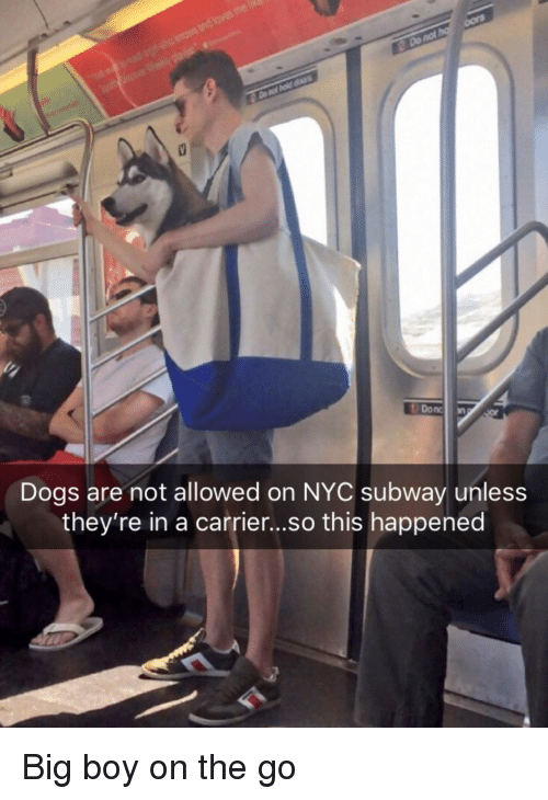 Dogs, Subway, and Big Boy: Donc  Dogs are not allowed on NYC subway unless  they're in a carrier...so this happened Big boy on the go