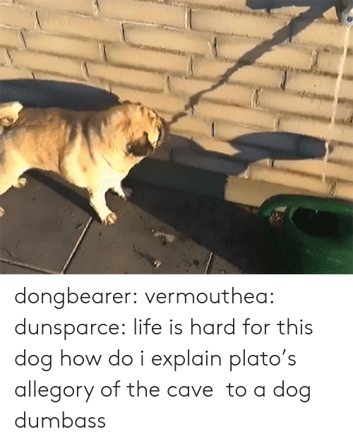 the cave: dongbearer: vermouthea:  dunsparce: life is hard for this dog how do i explain plato's allegory of the cave to a dog  dumbass