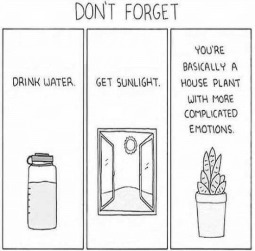 House, Water, and Sunlight: DON'T FORGET  YOU'RE  BASICALLY A  DRINK WATER  GET SUNLIGHT  HOUSE PLANT  ωTH ΜOAΕ  COMPLICATED  EMOTIONS