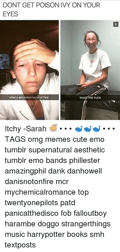 Haramber: DONT GET POISON IVY ON YOUR  EYES  when u get poison ivy on ur face  E FUCK Itchy -Sarah 🍜 • • • 🐋🐋🐋 • • • TAGS omg memes cute emo tumblr supernatural aesthetic tumblr emo bands phillester amazingphil dank danhowell danisnotonfire mcr mychemicalromance top twentyonepilots patd panicatthedisco fob falloutboy harambe doggo strangerthings music harrypotter books smh textposts