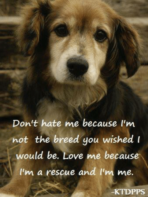Love, Memes, and Hate Me: Don't hate me because I'm  not the breed you wished I  would be. Love me because  I'm a rescue and lm me  KTDPPS