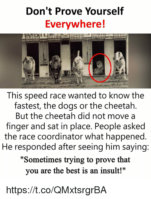 """Dogs, Memes, and Best: Don't Prove Yourself  Evervwhere!  This speed race wanted to know the  fastest, the dogs or the cheetah  But the cheetah did not move a  finger and sat in place. People asked  the race coordinator what happened  He responded after seeing him saying  """"Sometimes trying to prove that  you are the best is an insult!"""" https://t.co/QMxtsrgrBA"""