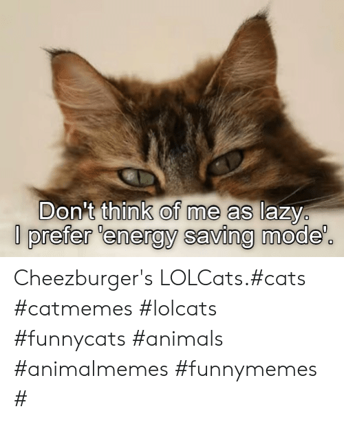 Animals, Cats, and Energy: Don't think of me as lazy  prefer 'energy saving mode'. Cheezburger's LOLCats.#cats #catmemes #lolcats #funnycats #animals #animalmemes #funnymemes #