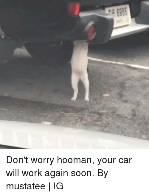 Dank, Soon..., and Work: Don't worry hooman, your car will work again soon.  By mustatee | IG