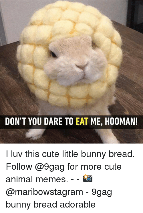 9gag, Cute, and Memes: DON'T YOU DARE TO EAT ME, HOOMAN I luv this cute little bunny bread. Follow @9gag for more cute animal memes. - - 📸 @maribowstagram - 9gag bunny bread adorable