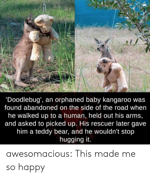 kangaroo: 'Doodlebug', an orphaned baby kangaroo wa:s  found abandoned on the side of the road when  he walked up to a human, held out his arms,  and asked to picked up. His rescuer later gave  him a teddy bear, and he wouldn't stop  hugging it. awesomacious:  This made me so happy