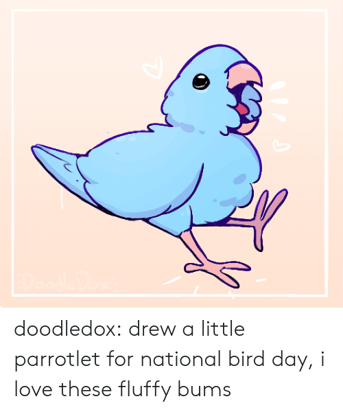 Love, Tumblr, and Blog: doodledox:  drew a little parrotlet for national bird day, i love these fluffy bums
