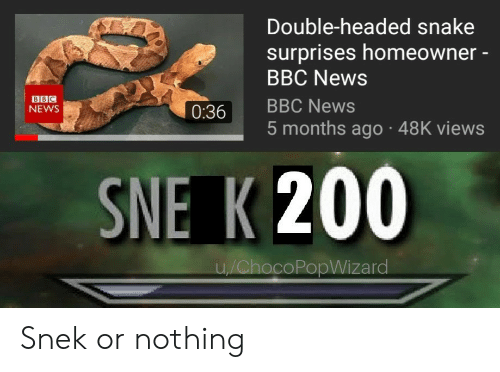 Surprises: Double-headed snake  surprises homeowner -  BBC News  BBC  NEWS  0:36 BBC News  5 months ago 48K views  SNE K 200  coPopWizard Snek or nothing
