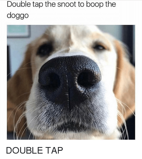 Memes, Boop, and 🤖: Double tap the snoot to boop the  doggo DOUBLE TAP
