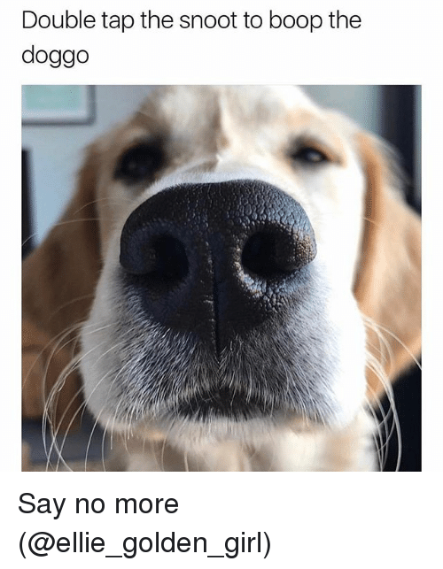 Memes, Girl, and Say No More: Double tap the snoot to boop the  doggo Say no more (@ellie_golden_girl)