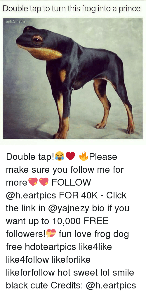 Memes, 🤖, and 40k: Double tap to turn this frog into a prince  Tank Sinatra Double tap!😂❤️ 🔥Please make sure you follow me for more💖💖 FOLLOW @h.eartpics FOR 40K - Click the link in @yajnezy bio if you want up to 10,000 FREE followers!💝 fun love frog dog free hdoteartpics like4like like4follow likeforlike likeforfollow hot sweet lol smile black cute Credits: @h.eartpics