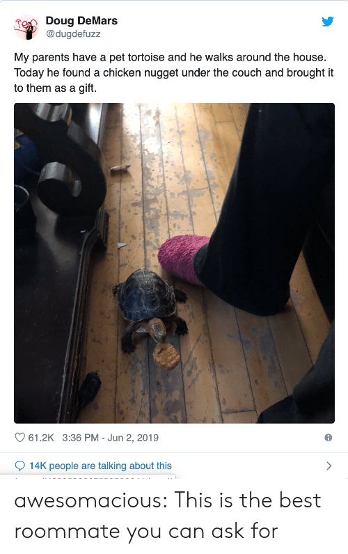 tortoise: Doug DeMars  @dugdefuzz  My parents have a pet tortoise and he walks around the house.  Today he found a chicken nugget under the couch and brought it  to them as a gift.  61.2K 3:36 PM Jun 2, 2019  14K people are talking about this awesomacious:  This is the best roommate you can ask for