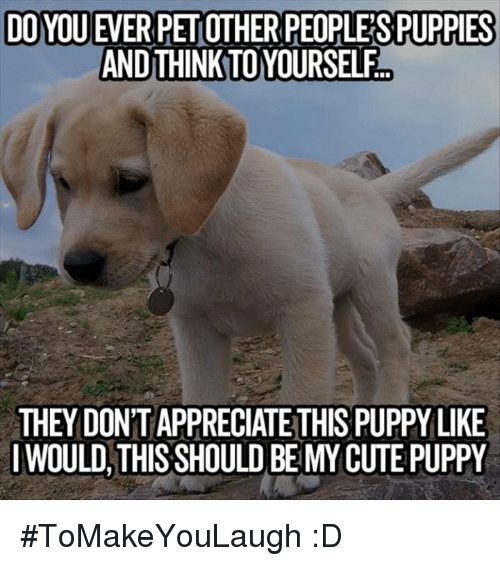 Cute, Memes, and Puppies: DOYOU EVERPETOTHER PEOPLE SPUPPIES  AND THINKTOYOURSELF  THEY DONTAPPRECIATE THIS PUPPY LIKE  I WOULD THIS SHOULD BE MY CUTE PUPPY #ToMakeYouLaugh :D