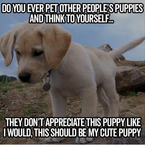 Cute, Dank, and Puppies: DOYOU EVERPETOTHER PEOPLE SPUPPIES  AND THINKTOYOURSELF  THEY DONTAPPRECIATE THIS PUPPY LIKE  I WOULD THIS SHOULD BE MY CUTE PUPPY