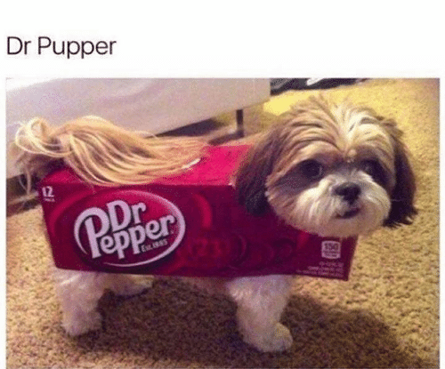 Memes, 🤖, and Pupper: Dr Pupper  12