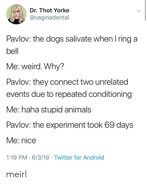 Repeated: Dr. Thot Yorke  @vaginadental  Pavlov: the dogs salivate when I ring a  bell  Me: weird. Why?  Pavlov: they connect two unrelated  events due to repeated conditioning  Me: haha stupid animals  Pavlov: the experiment took 69 days  Me: nice  1:19 PM 6/3/19 Twitter for Android meirl