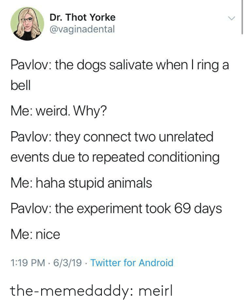 Repeated: Dr. Thot Yorke  @vaginadental  Pavlov: the dogs salivate when I ring a  bell  Me: weird. Why?  Pavlov: they connect two unrelated  events due to repeated conditioning  Me: haha stupid animals  Pavlov: the experiment took 69 days  Me: nice  1:19 PM 6/3/19 Twitter for Android the-memedaddy:  meirl