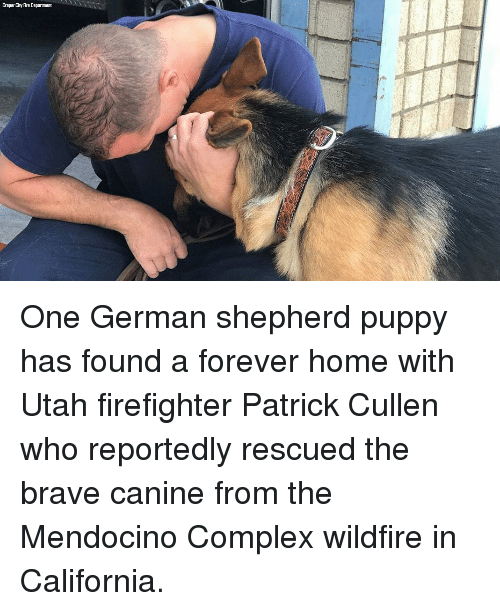 Complex, Fire, and Memes: Draper City Fire Department One German shepherd puppy has found a forever home with Utah firefighter Patrick Cullen who reportedly rescued the brave canine from the Mendocino Complex wildfire in California.