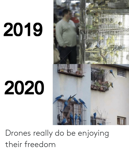 Reddit, Drones, and Freedom: Drones really do be enjoying their freedom