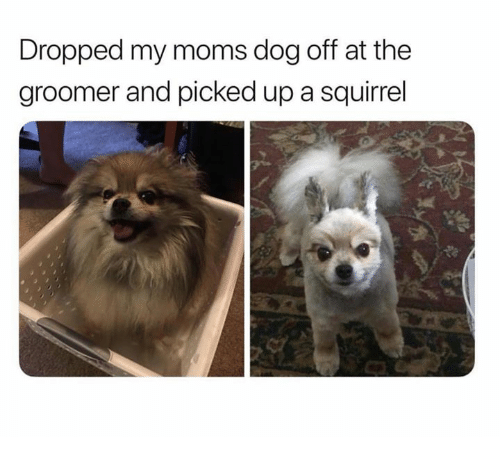 Moms, Squirrel, and Dog: Dropped my moms dog off at the  groomer and picked up a squirrel