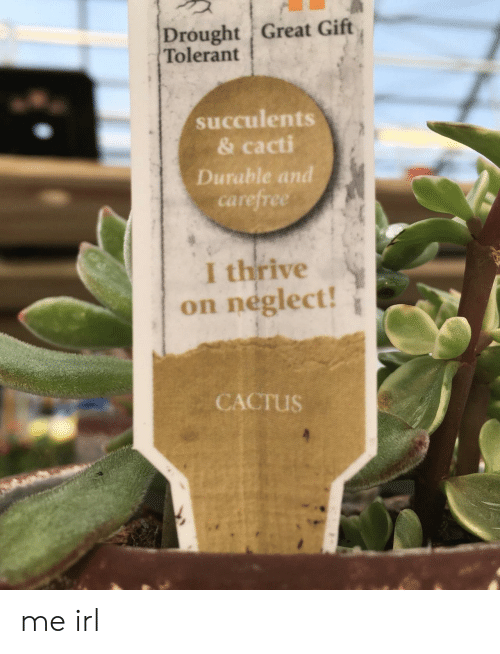 Irl, Me IRL, and Cactus: Drought Great Gift  Tolerant  succulents  & cacti  Durable and  carefree  I thrive  on neglect!  CACTUS me irl